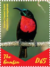 Colnect-5621-896-African-Sunbirds.jpg