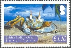 Colnect-1425-787-Ghost-Crab-Ocypode-ceratophthalma-.jpg