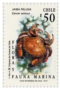 Colnect-553-554-Crab-Cancer-setosus-.jpg