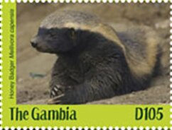 Colnect-5726-974-Honey-Badger-Mellivora-capensis.jpg