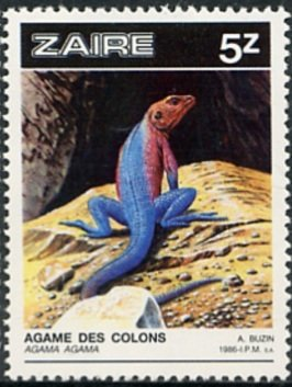 Colnect-1132-612-Red-headed-Rock-Agama-Agama-agama.jpg