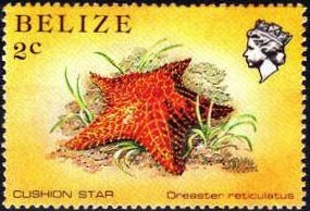 Colnect-740-500-Red-Cushion-Sea-Star-Oreaster-reticulatus.jpg