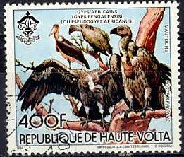 Colnect-2071-365-White-backed-Vulture-Gyps-africanus.jpg