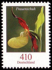 Colnect-580-288-Cypripedium-calceolus---Lady--s-slipper-Orchid.jpg