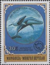 Colnect-911-155-Blue-Whale-Balaenoptera-musculus.jpg