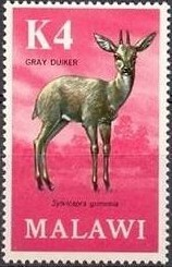 Colnect-1734-089-Gray-Duiker-Sylvicapra-grimmia.jpg
