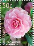 Colnect-457-336-Hari-Withers-Camelia.jpg