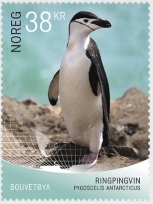 Colnect-4727-645-Pygoscelis-antarcticus-Chinstrap-penguin.jpg