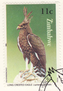 Colnect-1209-922-Long-Crested-Eagle.jpg