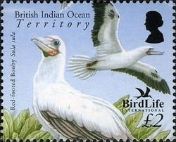 Colnect-1425-658-Red-footed-Booby-Sula-sula.jpg