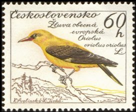 Colnect-447-276-Golden-Oriole-Oriolus-oriolus.jpg