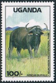 Colnect-3471-424-African-Buffalo-Syncerus-caffer-Murchison-Falls-National-.jpg