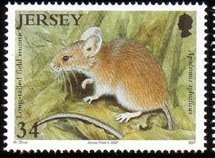 Colnect-704-449-Wood-Mouse-Apodemus-sylvaticus.jpg