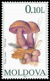 Colnect-507-802-Mushrooms.jpg