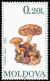 Colnect-507-803-Mushrooms.jpg