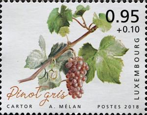 Colnect-6287-005-Pinot-Gris.jpg