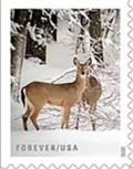 Colnect-7323-382-Deer-in-Snow.jpg
