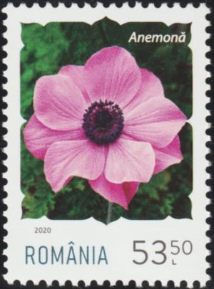 Colnect-6596-453-Anemone.jpg