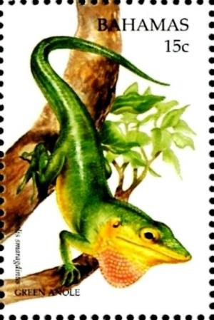Colnect-4131-935-Green-anole.jpg