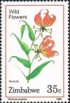 Colnect-4597-694-Flame-Lily.jpg