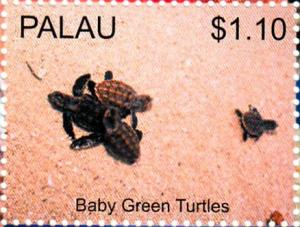 Colnect-4910-099-Baby-Green-Turtles.jpg