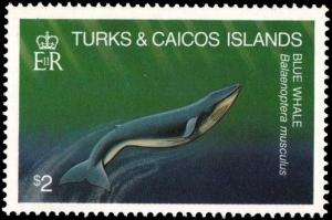 Colnect-3991-006-Balaenoptera-Musculus.jpg