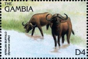 Colnect-4698-231-African-buffalo.jpg