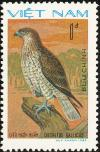 Colnect-1613-197-Short-toed-Snake-Eagle-Circaetus-gallicus.jpg