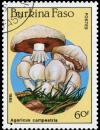 Colnect-3495-646-Agaricus-campestris.jpg