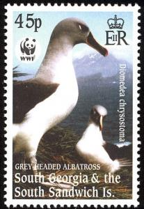 Colnect-4571-620-Grey-headed-Albatross-Thalassarche-chrysostoma.jpg