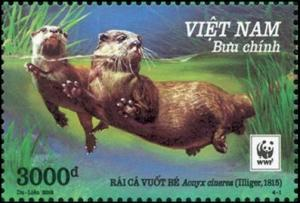 Colnect-4381-825-Asian-small-clawed-otter-nbsp-Aonyx-cinerea.jpg