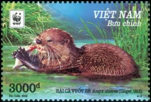 Colnect-4381-826-Asian-small-clawed-otter-nbsp-Aonyx-cinerea.jpg