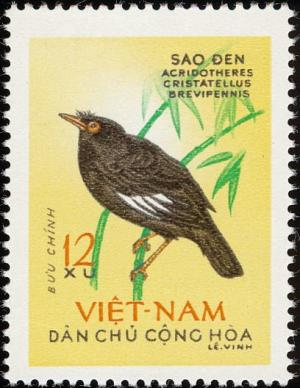 Colnect-1445-796-Crested-Myna-Acridotheres-cristatellus.jpg