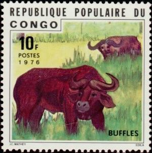 Colnect-3683-518-African-Buffalo-Syncerus-caffer.jpg