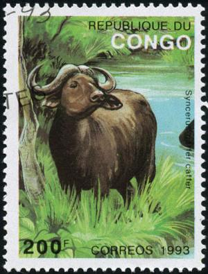 Colnect-783-893-African-Buffalo-Syncerus-caffer.jpg