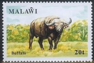 Colnect-864-304-African-Buffalo-Syncerus-caffer.jpg