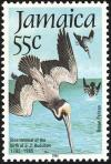 Colnect-1700-676-Brown-Pelican-Pelecanus-occidentalis.jpg