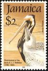 Colnect-1700-677-Brown-Pelican-Pelecanus-occidentalis.jpg