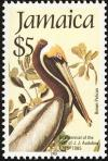 Colnect-1700-678-Brown-Pelican-Pelecanus-occidentalis.jpg