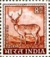 Colnect-1519-768-Chital-Axis-axis.jpg