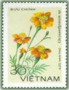 Colnect-1625-795-Chrysanthemum-sp.jpg