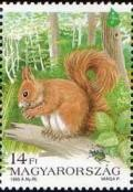 Colnect-574-232-Red-Squirrel-Sciurus-vulgaris-Beetle-Forest.jpg