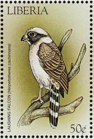Colnect-1641-828-Laughing-Falcon-Herpetotheres-cachinnans.jpg