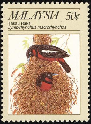 Colnect-1487-228-Black-and-red-Broadbill-Cymbirhynchus-macrorhynchos.jpg
