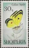 Colnect-452-951-Pale-Clouded-Yellow-Colias-hyale-.jpg