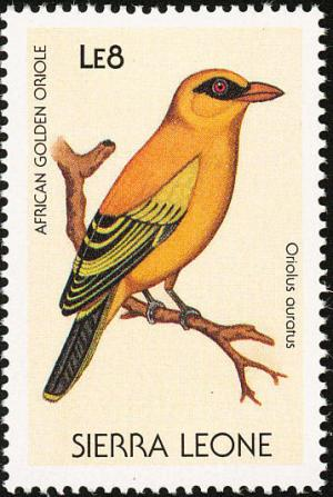 Colnect-1618-026-African-Golden-Oriole-Oriolus-auratus.jpg