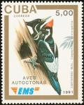 Colnect-3568-381-Ivory-billed-Woodpecker-Campephilus-principalis.jpg