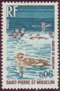 Colnect-875-193-Long-tailed-Duck-Clangula-hyemalis.jpg