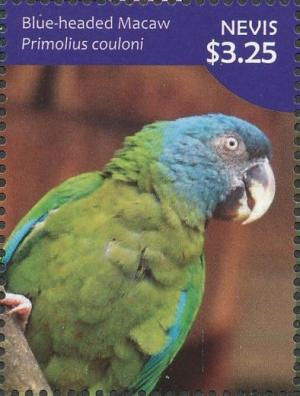 Colnect-4412-931-Blue-headed-Macaw-Primolius-couloni.jpg