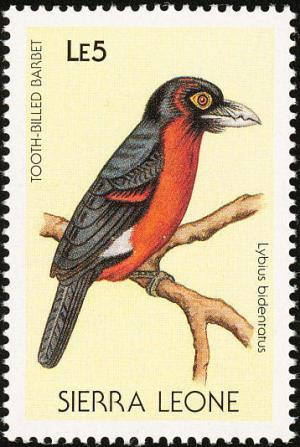 Colnect-1618-025-Double-toothed-Barbet-Lybius-bidentatus.jpg